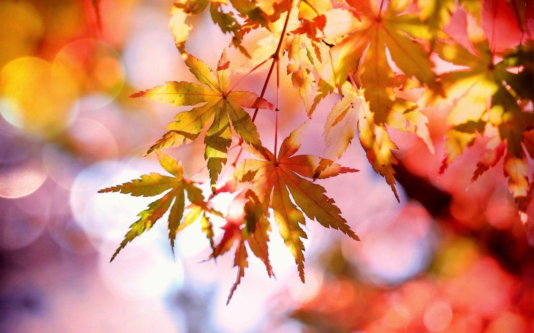 November – The Month for Gratitude